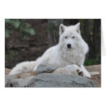 Arctic Wolf Greeting Cards