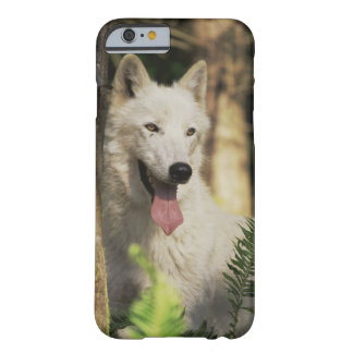 Arctic wolf in forest barely there iPhone 6 case