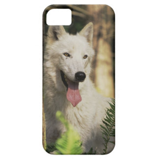 Arctic wolf in forest iPhone SE/5/5s case