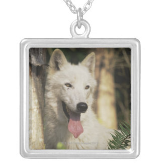 Arctic wolf in forest silver plated necklace