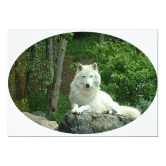 "Arctic Wolf Invitation 5"" X 7"" Invitation Card"