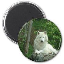 Arctic Wolf Magnet