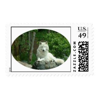 Arctic Wolf Postage Stamp