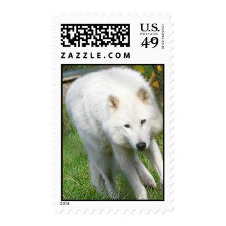 Arctic Wolf Stamp