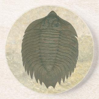 Arctinurus Boltoni Trilobite Coaster
