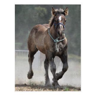 Ardennes foal postcard