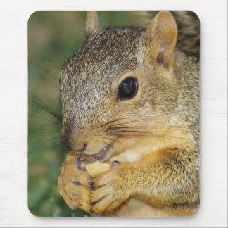 Ardilla adorable que come el cojín de ratón de la alfombrillas de ratón