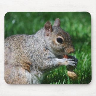 Ardilla con el cojín de ratón de la nuez alfombrillas de raton