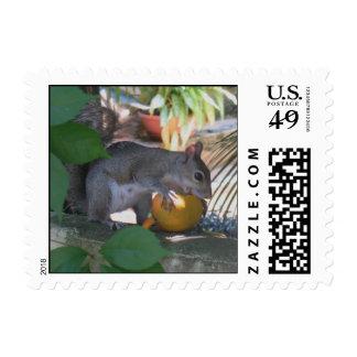 Ardilla con el mango sellos