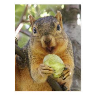 Ardilla con la postal de la pera