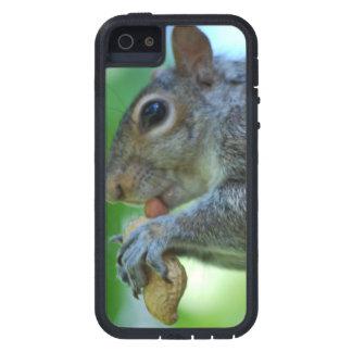 Ardilla con una nuez iPhone 5 Case-Mate fundas