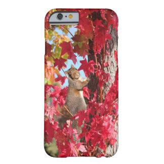 Ardilla curiosa en árbol del otoño funda de iPhone 6 barely there