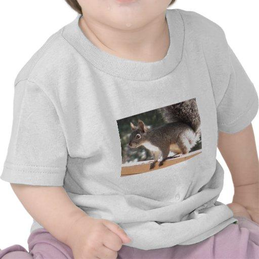 Ardilla curiosa camisetas
