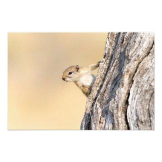 Ardilla de árbol cojinete