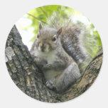 Ardilla de árbol pegatinas redondas