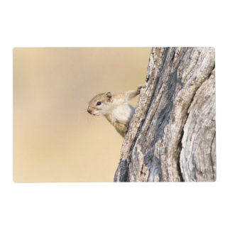 Ardilla de árbol tapete individual