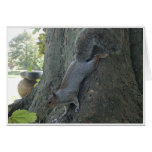 Ardilla de árbol tarjeta