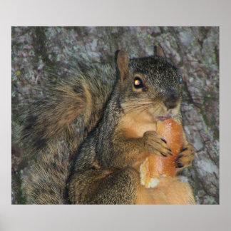 Ardilla de Fox adorable en un árbol que come un ro Impresiones