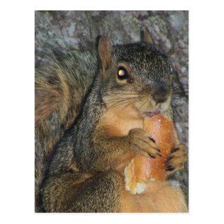 Ardilla de Fox adorable en un árbol que come un Tarjeta Postal