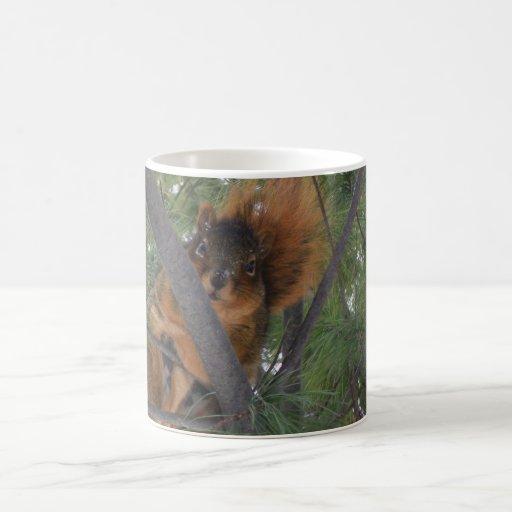 Ardilla de Fox del invierno en árbol de pino Taza Básica Blanca