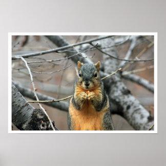 Ardilla de Fox en árbol que come la nuez Póster