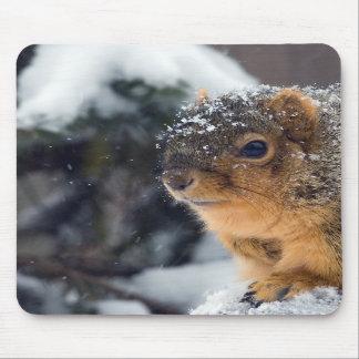 Ardilla de Fox en invierno Alfombrilla De Ratones