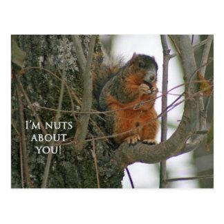 ¡Ardilla de Fox - soy Nuts sobre usted! Postales