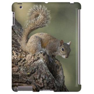 Ardilla de gris del este, o ardilla gris funda para iPad