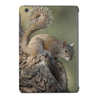 Ardilla de gris del este, o ardilla gris fundas de iPad mini
