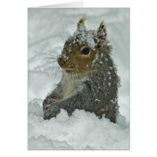 Ardilla de la nieve tarjeta de felicitación