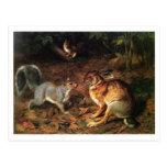 Ardilla de la reunión del conejo tarjeta postal