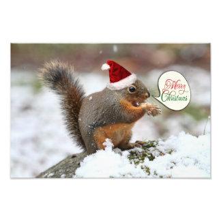 Ardilla de Navidad en nieve Impresion Fotografica