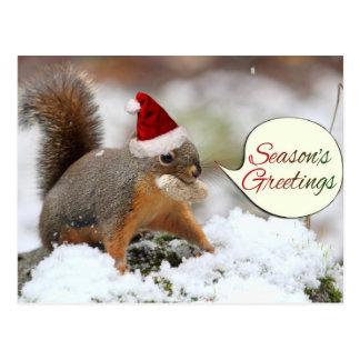 Ardilla de Navidad en nieve Postales