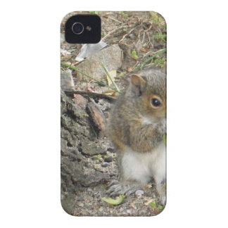 ardilla de Nueva Inglaterra que goza de un bocado iPhone 4 Case-Mate Carcasa