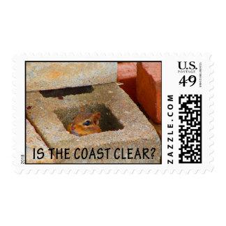 Ardilla de ocultación sellos