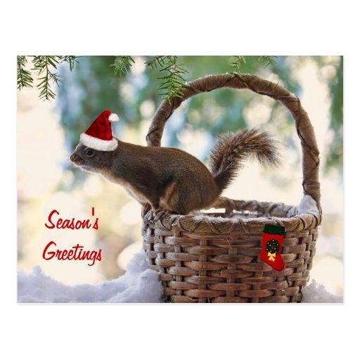 Ardilla de Santa en cesta del navidad Nevado Postal