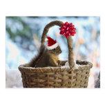 Ardilla de Santa en nieve Postales