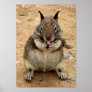 Ardilla de Squirrely Posters