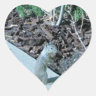 Ardilla de tierra bonita de California Pegatina En Forma De Corazón