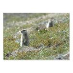 ardilla de tierra en Alaska que mira alrededor Tarjeta De Visita