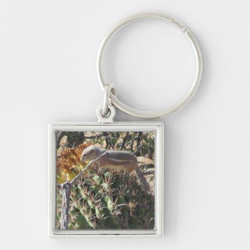 Ardilla de tierra en llavero del cactus de barril