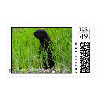 Ardilla de tierra negra de BGRO Sello Postal