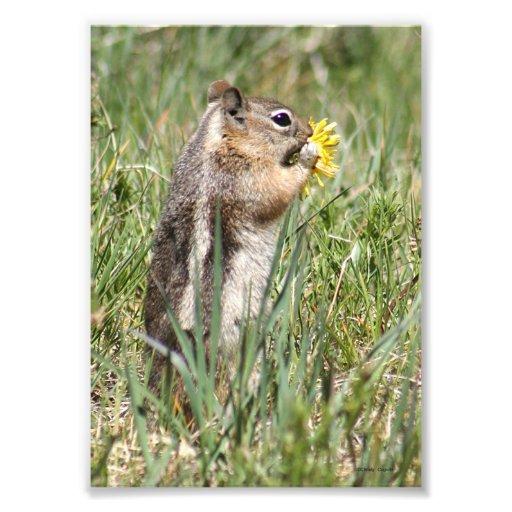Ardilla de tierra que come la flor fotografia