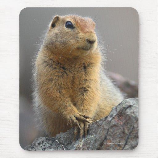 Ardilla de tierra tapete de raton