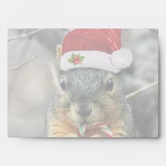 Ardilla del navidad sobres