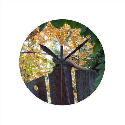 Ardilla del otoño III Relojes