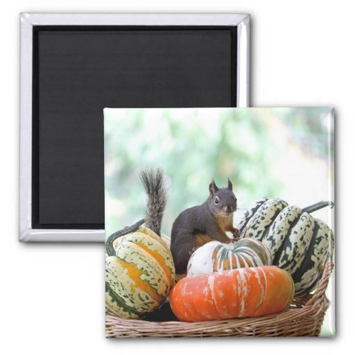 Ardilla del otoño imán cuadrado