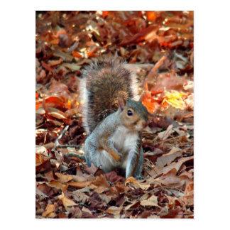 Ardilla del otoño postal