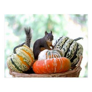 Ardilla del otoño tarjeta postal