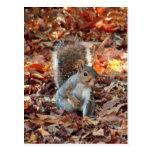Ardilla del otoño tarjetas postales